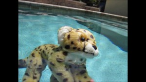 cheetah swimming